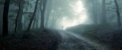 foresta oscura